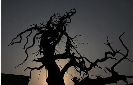 在高淳古柏镇就有这样一棵古树